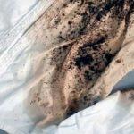 Как можно удалить черную плесень с белой ткани